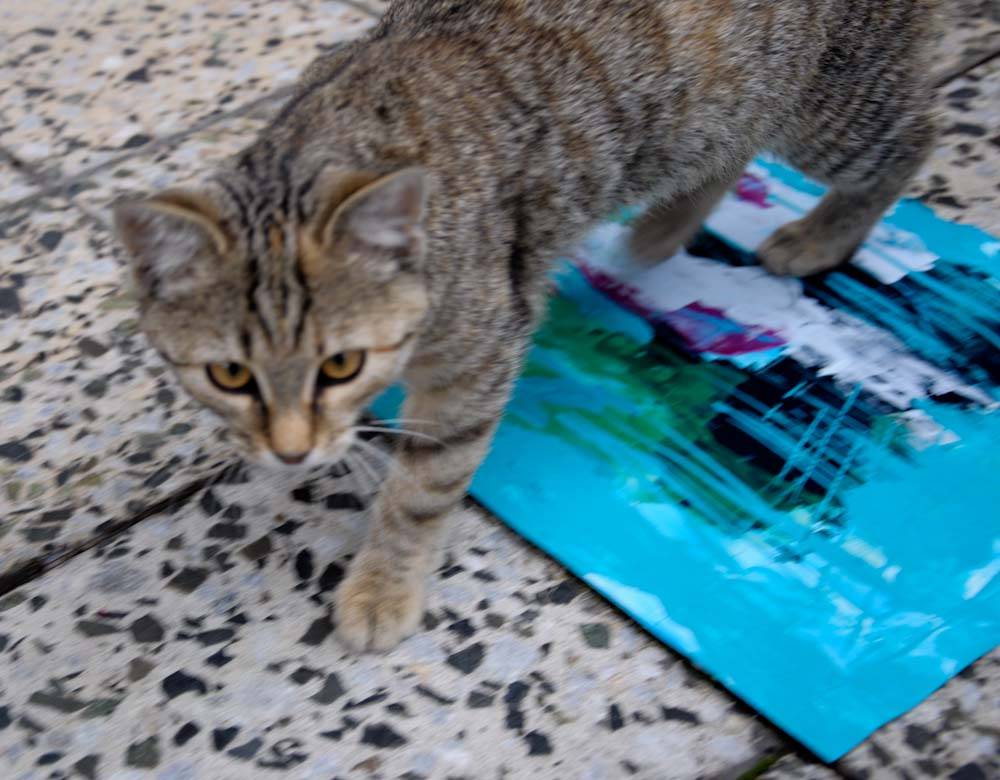 new_kitten.jpg